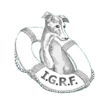 Italian Greyhound Rescue Foundation